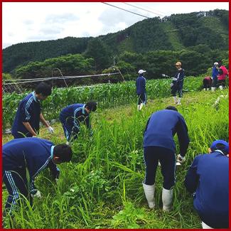 農林業体験